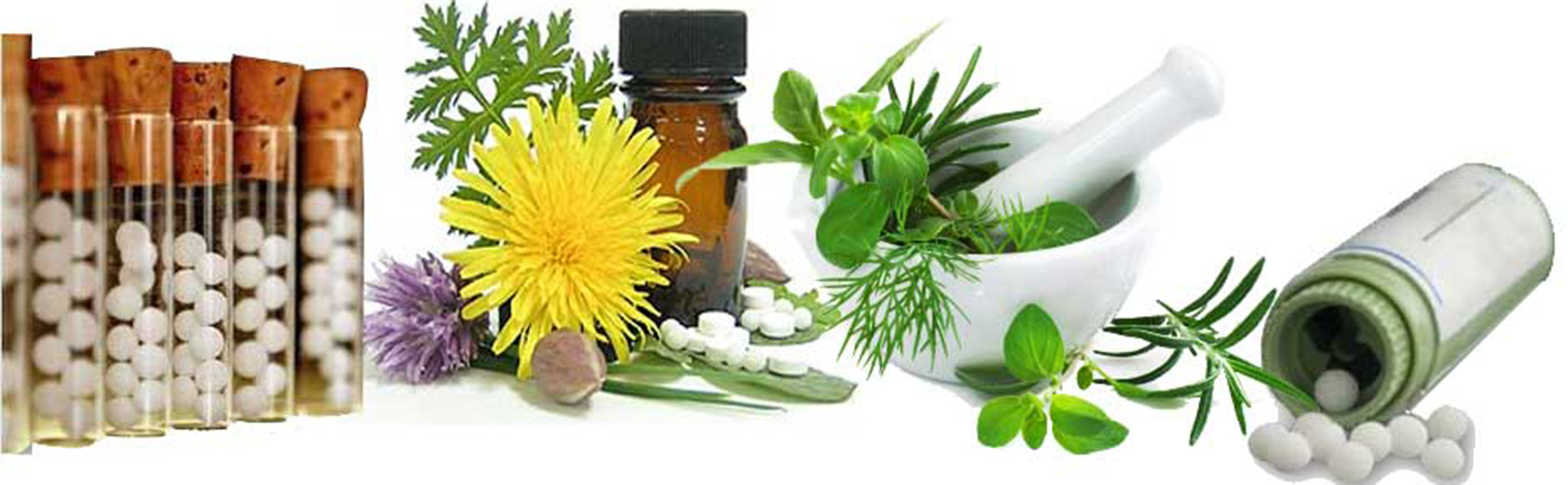 succession potentized homeopathic and dynamic phytotherapy remedies Animal/lab studies by date of publication  treatment with homeopathic remedies significantly increased the  and morphological studies using dynamic light.